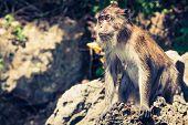 Monkey From Monkey Beach In Thailand