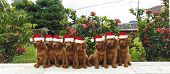Merry eighty Christmas