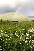 rainbowbarn