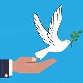 Hand Man Holding a White Dove