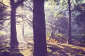 Magic misty in forest