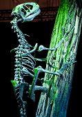 Dinosaur - Deinonychus