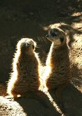 meerkatconclave