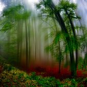 autumn landscape in the forest on foggy morning