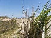 Beach In The Delta Of Ebro