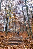 Trekking Path In The Forest With A Girl Walking