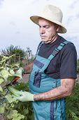 Farmer At His Urban Vegetable Garden