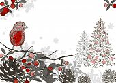 Christmas Hand Drawn Background For Xmas Design With Winter Birds