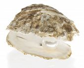 foto of pearl-oyster  - Oyster with pearl isolated on white background