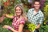 picture of greenhouse  - Gardening people - JPG