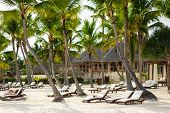 picture of caribbean  - Tropical Paradise in Dominican Republic or Seychelles or Caribbean - JPG