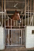picture of stable horse  - Horse in stable - JPG