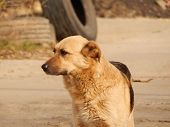 stock photo of dump  - Homeless stray dog alone at the dump  - JPG