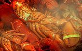 Steaming Lobster Feast
