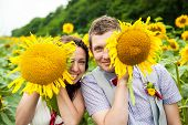 picture of sunflower  - happy couple in love having fun in field full of sunflowers - JPG