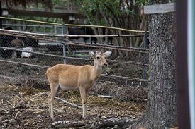 picture of zoo  - Zoo Chiangmai Thailand - JPG