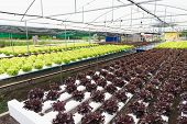 The Hydroponics In Farm. Organic Hydroponic Vegetable poster