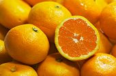 pic of mandarin orange  - mandarines - JPG