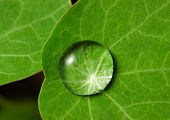 Droplet on leaf