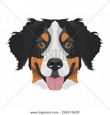 poster of Illustration Bernese Mountain Dog