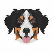 Illustration Bernese Mountain Dog poster
