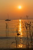 stock photo of bull rushes  - Romantic sunset silhouette of ducks and boats on Lake Garda  - JPG