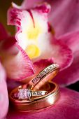 Wedding Rings Sitting On A Beautiful Pink Flower