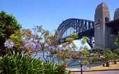 Sydney Harbor Bridge And Foliage