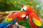 Macaws Working Together