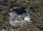Salt crystals on a rock.