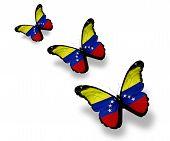 Three Venezuelan Flag Butterflies, Isolated On White