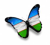 Uzbek Flag Butterfly, Isolated On White