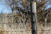 Fence post with barbed wire