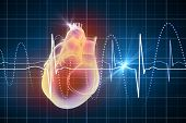 stock photo of cardiovascular  - Virtual image of human heart with cardiogram - JPG