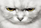 portrait of beautiful cat closeup