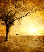 golden sunset - artistic toned picture