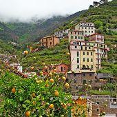 bella Italia series - Riomaggiore mountain village with famous lemons, Cinque terre