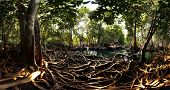 stock photo of swamps  - Mangrove trees in a peat swamp forest - JPG