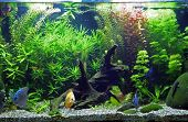 Planted Tropical Freshwater Aquarium