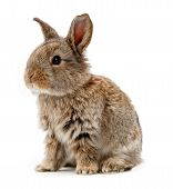 pic of wild-rabbit  - Animals - JPG