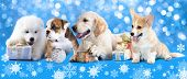stock photo of puppy christmas  - Puppies with Christmas gifts - JPG