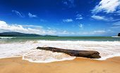 Sea beach and dead driftwood tree trunk. Tropical landscape