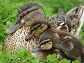 Mom And Her Babies