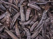 Carob bean backgrounds