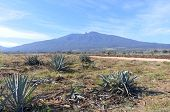 Постер, плакат: Tequila Volcano And Agave Fields