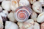Blue detail spiral with many seashells for decoration