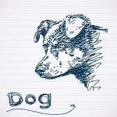 Sketch of dog muzzle Vector