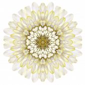 White Chrysathemum Mandala Flower Kaleidoscopic Isolated On White