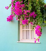 The Window Framed With Fresh  Flowers