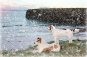 Beach View With Two Dogs